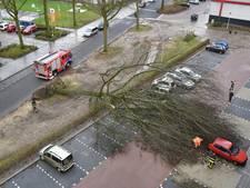 In beeld: overal in Brabant waaien bomen om