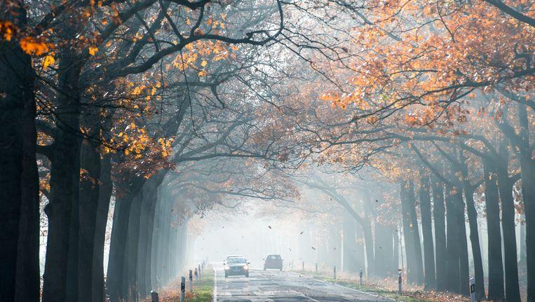 De mist lost waarschijnlijk pas in de loop van de ochtend op. Beeld ap