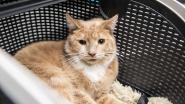 Opvallende Valentijnsactie: kortingsbonnen voor sterilisatie en castratie van katten