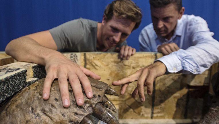Bioloog Freek Vonk met de bovenkaak van de T.rex. Beeld anp