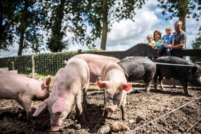 'Hof de Eendragt' van Jeroen en Cora Meijering-van Dam heeft als eerste varkensboerderij in Zeeland vijf sterren voor dierenwelzijn gekregen.