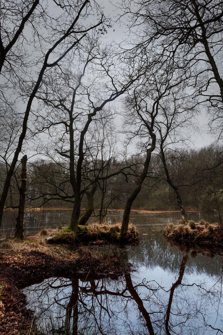 Dubbel genieten aan je 'eigen' meer, in de zomer natuurlijk met bladeren aan de bomen. Beeld Pauline Marie Niks