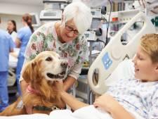 Een hond als therapeut: 'Een dier kan je beter maken, ook psychologisch'