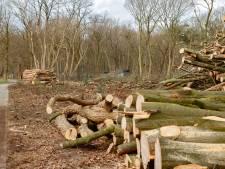 Verzet van Bomenstichting of niet; bomenkap Vlijmen gaat door
