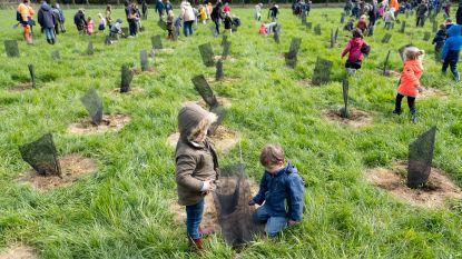 Gemeente Puurs-Sint-Amands plant 50.000 nieuwe bomen op 5 jaar tijd