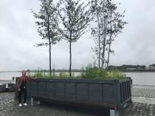 """Nieuwe zitbanken aan nomadenbomen op Scheldekaaien: """"Zo kan je rustig genieten van het uitzicht"""""""