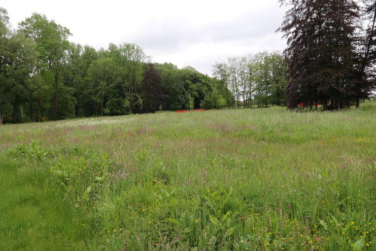De gemeente gaat volop de natuurlijke elementen in het park gebruiken om het Kasteeldomein nog aantrekkelijker te maken.