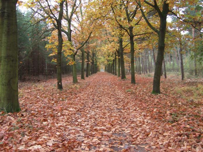 De mooie herfstkleuren in de natuur rondom de Weebosch nodigen uit tot wandelen.