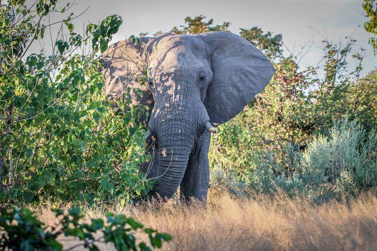 Een olifant. Archiefbeeld.
