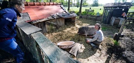 Enschedese dierenarts waarschuwt: 'Hobbyvee? Bezint eer ge begint'