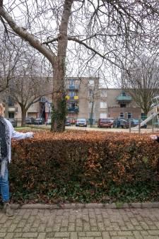Tientallen meters kerstverlichting gestolen in Apeldoorn: 'Wie doet nu zoiets?'