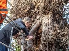 Honderden bomen door heel Zwolle kappen, is dat nou nodig?