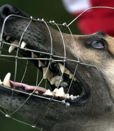 Honderden klachten over honden in Zwolle: vorig jaar 13 mensen gebeten