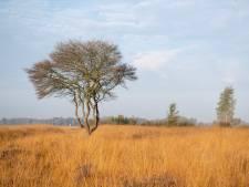 VVD en CDA willen af van natuurgebied Wierdense Veld