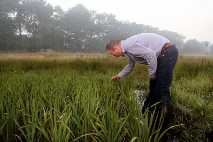 Rijstteelt is voor Nederland bijzonder. Volgens initiatiefnemer Jan Veerhuis verdient zijn experiment een vervolg. foto Chris van Klinken/Pix4Profs