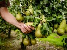 Agrariërs mogen arbeidsmigrant meer leefruimte geven, maar moeten wel toestemming vragen