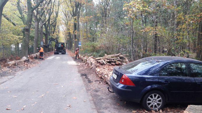 Om wild parkeren in de bermen langs de Duinlaan te verhinderen, zijn vrijdag boomstammen gelegd.