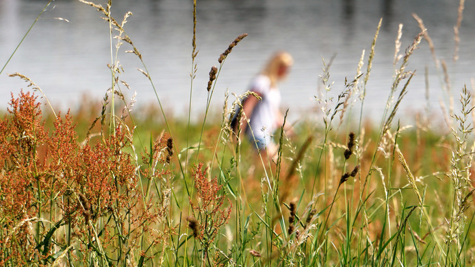 'In een zomerse sfeer en zinderende warmte wandelt deze jongedame geheel in gedachten, verscholen tussen de begroeiing, langs de Lek in Vianen.'