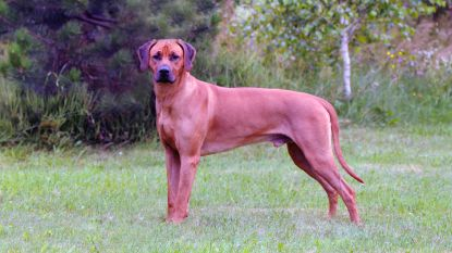 Baasje eist 224.000 euro van jager voor dode hond