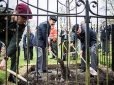 'Wilhelminalinde' van 'Kareltje Eenoog' keert terug als 'stekje' op Bronbeek