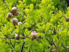3 juni: Eco Tuindagen bij Zeeuwse en Vlaamse tuinen