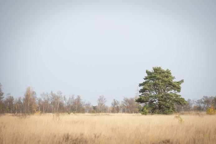 Het Wierdense Veld ligt onder vuur. CDA en VVD willen van het Natura-2000 gebied af.