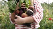 Moestuinieren voor beginners: met deze 5 groenten- en fruitsoorten lukt het