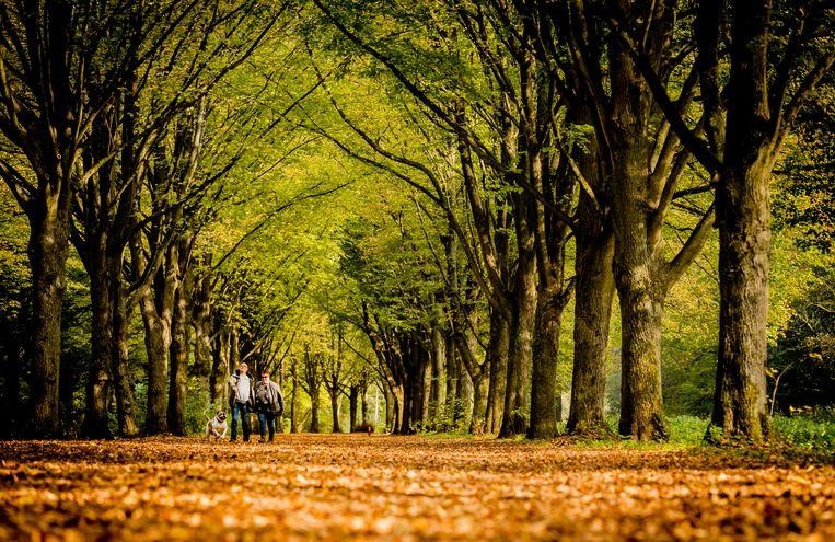 In plaats van zwemmen kan men wel wandelen in het Amsterdamse Bos. Beeld Hollandse Hoogte /  ANP
