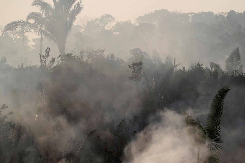 De Braziliaanse president Jair Bolsonaro ziet de Amazone als een binnenlandse kwestie en wijst elke buitenlandse bemoeienis af.
