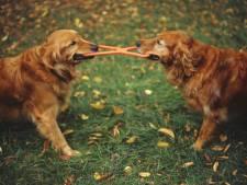 Hondenbezitters in Best zijn het haasje