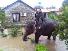Reisagent op olifant ontzet Hengelose familie
