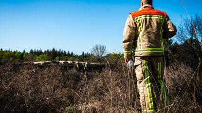 Droogste maand mei in 187 jaar, code rood voor extreem brandgevaar in Antwerpse en Limburgse natuurgebieden