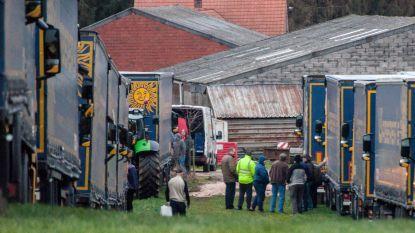 200 Hongaarse chauffeurs laten trucks achter op weiland om thuis eindejaar te vieren: landbouwer en tussenpersoon riskeren elk 3.000 euro boete