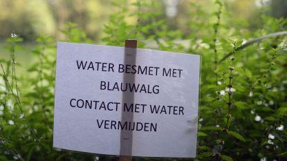 Captatie- en recreatieverbod in Molenbeek door blauwalgen
