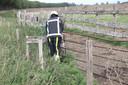 Een koe in de buurt van Megen zat met zijn kop vast in een hek.