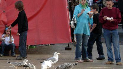 """Vogelbescherming Vlaanderen kritisch voor meeuwenpil: """"Wat als andere diersoorten de anticonceptiva opeten?"""""""