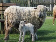 Kinderboerderij Kokiezier in Doetinchem krijgt geld voor opknapbeurt