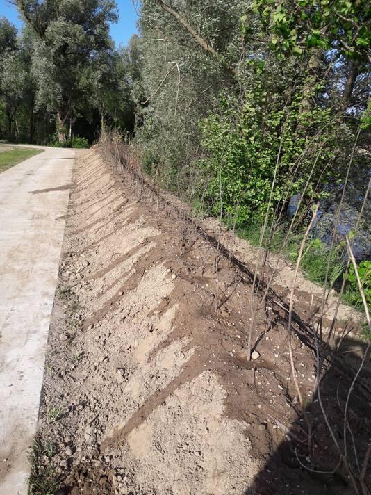 Een flink deel van de oevers langs de zuidelijke Berendonckplas is volgezet met struiken; al dan niet op walletjes.