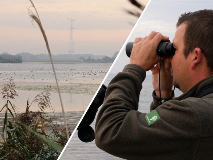 Drones boven natuurgebieden: 'Het probleem is dat vogels er echt van schrikken'