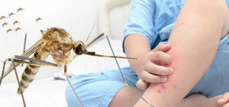 Muggen zzzzzzzzijn op dit moment niet weg te slaan