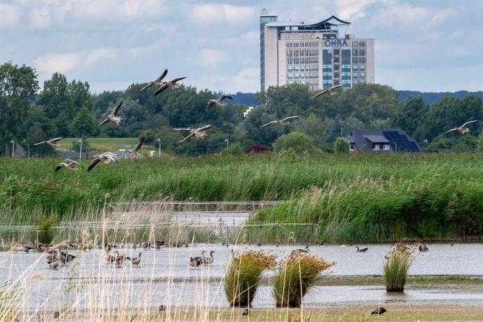 Vogels in Park Lingezegen. 'Zelfs als amateur ornitholoog – zeg maar mussenkenner – zie je er lepelaars, roerdompen en baardmannetjes.'