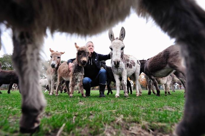 Willemien van Oers met haar kudde micro-mini-ezels bij de boerderij in Schijf. Haar ezelfokkerij Will-Power is de grootste van Europa.