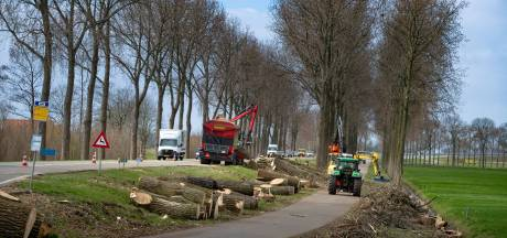 Zaag slaat toe bij honderden populieren langs Frieseweg bij Kampen