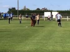 Un alpaga perturbe un match de football en Grande-Bretagne