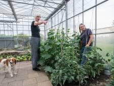 Baronieboeren ook bij Prinsenbeekse tuinderij aan de slag