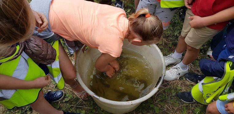 Wie kan een paling vastgrijpen? Alleen juf Annelies Decrock van lagere school Capucienen, blijkt wat later.