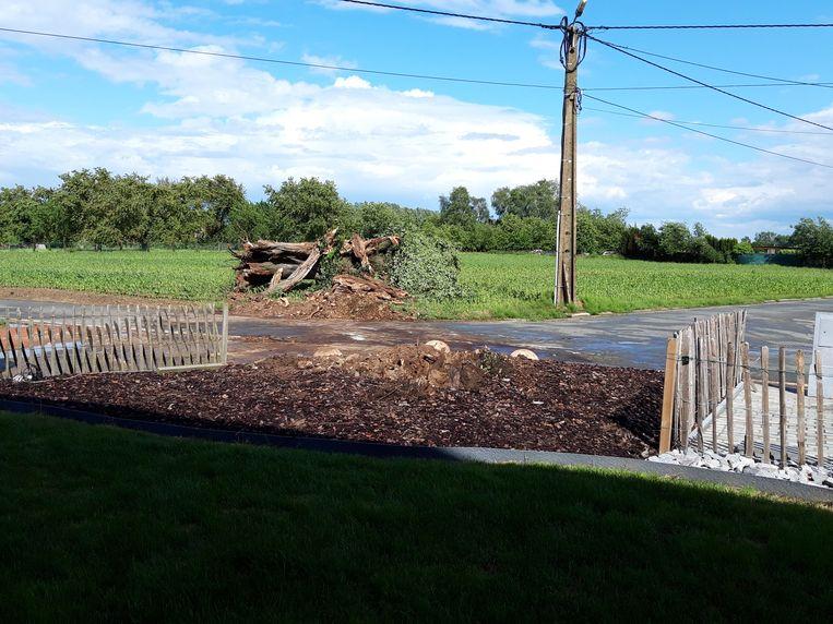 De boom werd weggesleept naar een naburig veld