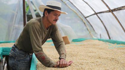 Het verhaal achter je dagelijkse kopje koffie