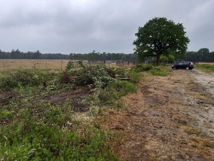 De restanten van wat natuurorganisaties 'een van de mooiste houtwallen van de Maashorst' noemen