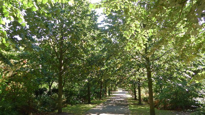 Lindenlaan in het Arboretum Oudenbosch: een pad met herinneringen